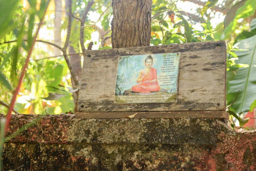 Picture of Buddha, in yoga garden